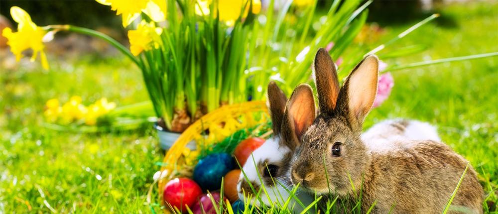 Osterwoche mit Frühlings- & MeranCard